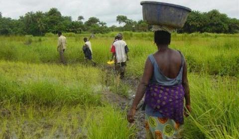 Togo: Bilan mitigé pour l'agriculture