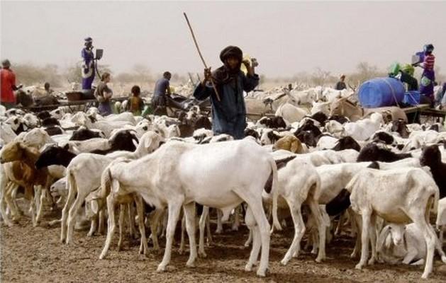 Tchad : 30% des exportations proviennent de la filière élevage