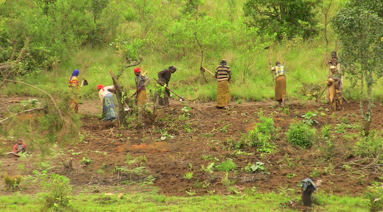 L'Afrique de l'Ouest invitée à intensifier les cultures vivrières