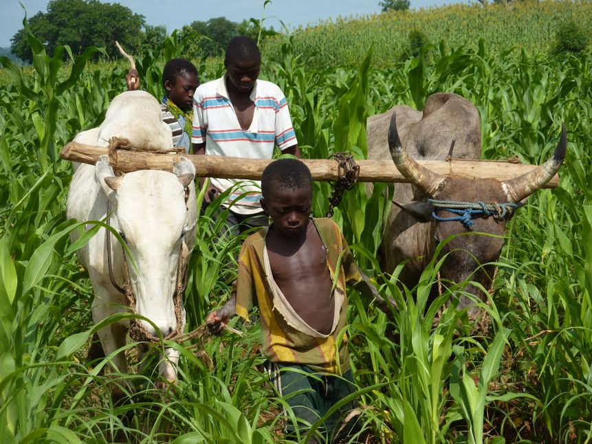 La FAO lance une nouvelle Plateforme numérique pour l'agriculture familiale