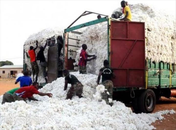 Production cotonnière : Le Bénin vise une hausse de plus de 20%