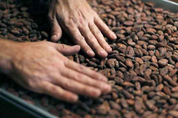 La Côte d'Ivoire revoit à la hausse le prix garanti pour le café