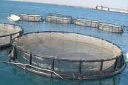 Une nouvelle écloserie d'aquaculture installée à El Argoub au sud du Maroc