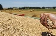 L'Algérie profite de la baisse des prix pour renflouer ses stocks de blé tendre
