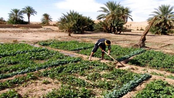 Algérie: Plus de la moitié des communes agricoles déficitaires