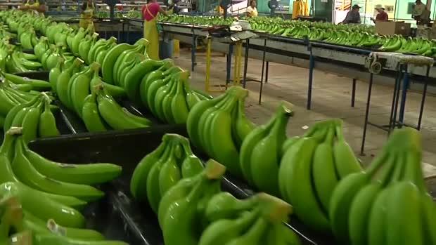 La banane du Cameroun se hisse à la première place