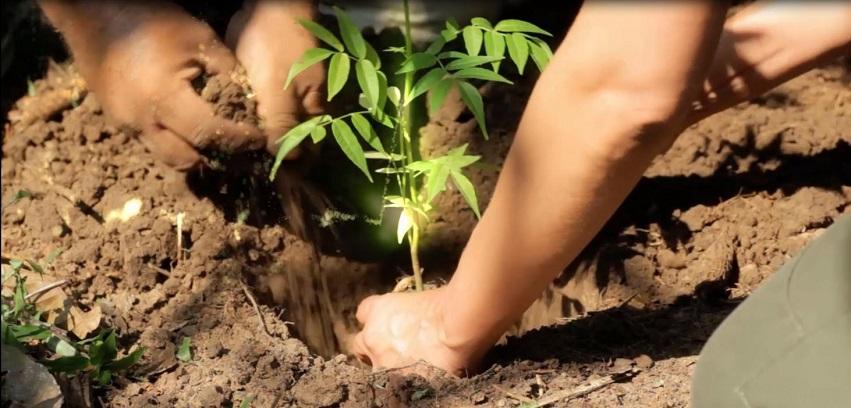 Ouganda : De petites sommes pour préserver la forêt