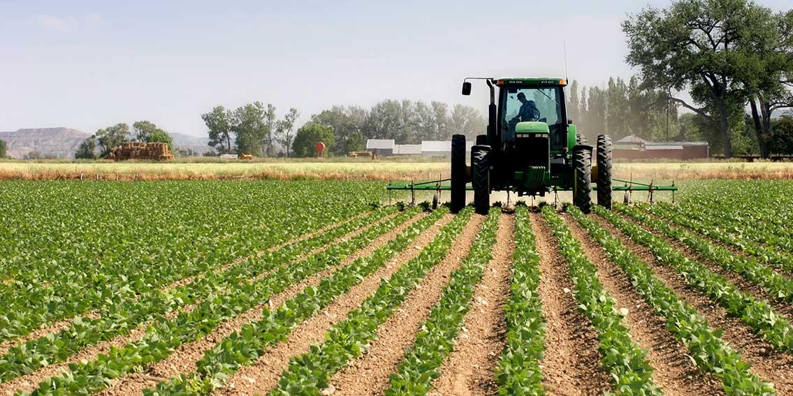 Les investissements en agriculture en Tunisie en hausse de 67% en 2017