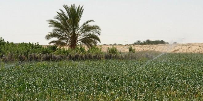 L'Algérie recours aux énergies alternatives dans l'agriculture