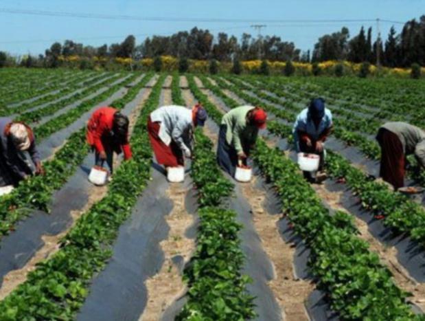 La BAD accorde au Sénégal43,1 millions € pour la transformation agro-industrielle en Casamance