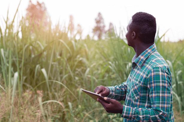 Microsoft et AGRA s'allient pour plus de digitalisation de l'agriculture en Afrique