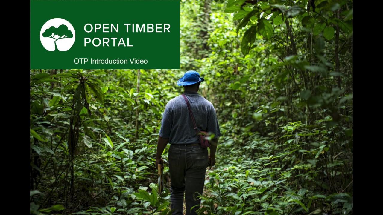 Le Cameroun, 2ème pays plus transparent au monde dans la gestion de la filière bois