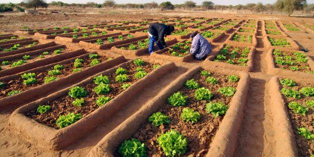 L'AFSA ouvre un débat sur la transition vers l'agro-écologie en Afrique