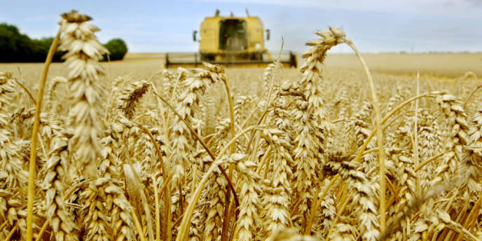 L'Argentine adopte le blé transgénique, une 1ère dans le monde