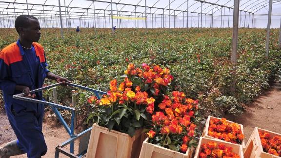 Floriculture: Le Kenya optimiste pour 2021