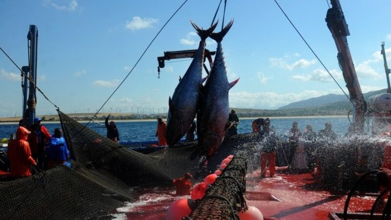 Le Gabon impose une transformation sur place de ses produits de la pêche
