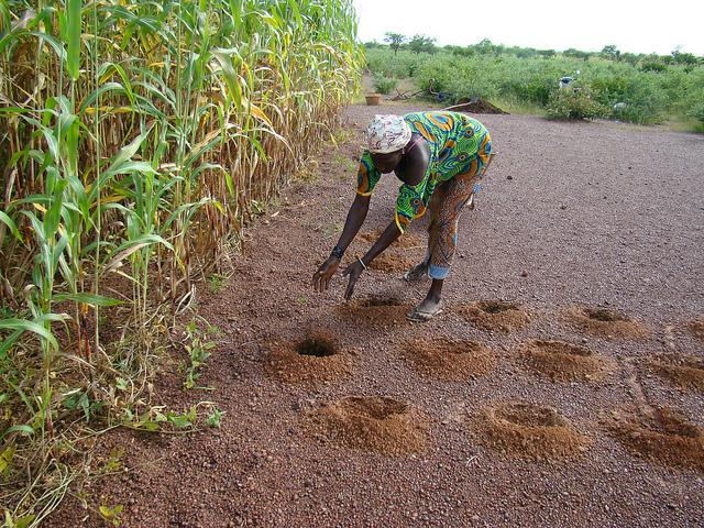 La Banque Mondiale plaide pour la restauration des terres arables au Sahel