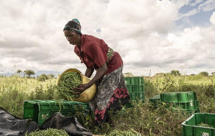 Afrique: Bientôt deux Centres d'excellence en agriculture et en logistique
