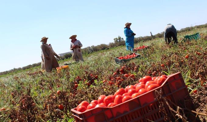 La Tunisie se dote d'un centre de formation professionnelle dans l'agriculture et la pêche