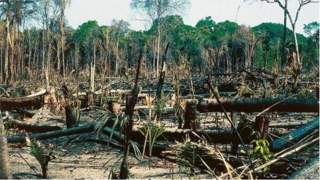 La Covid n'a pas freiné la déforestation dans le monde