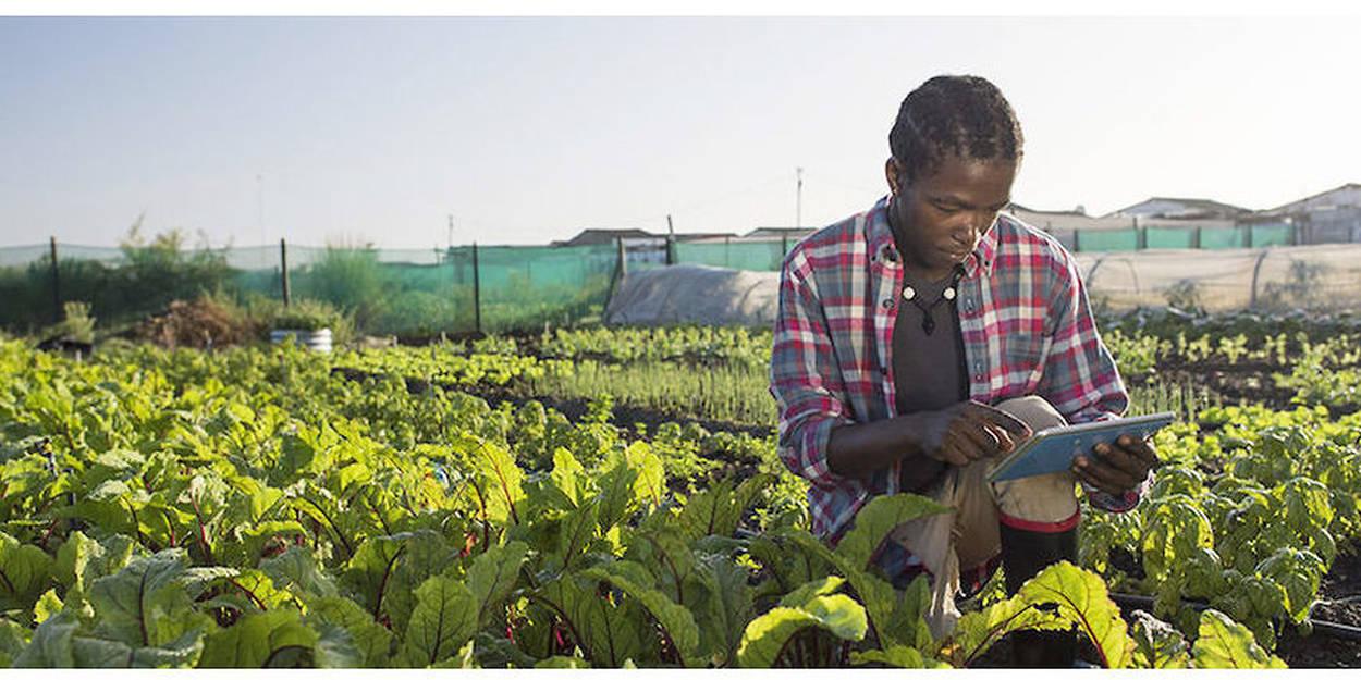 L'agriculture numérique fait sa place en Afrique