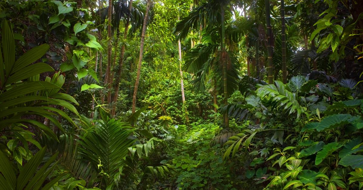 Nations Unies: Préserver les forêts pour atténuer les impacts du changement climatique
