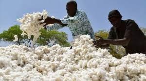 La France accorde 40 millions € à la filière ivoirienne du coton