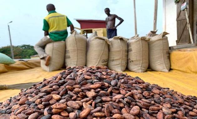 Le DRD a généré 890 millions $ pour les producteurs ivoiriens de cacao