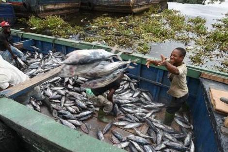 La RDCà la recherche d'investisseurs dans le secteur halieutique