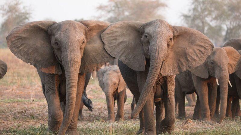 Le Gabon et le Costa Rica appellent à un nouvel accord mondial de lutte contre le trafic des espèces sauvages