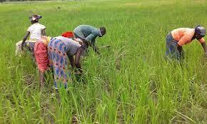 Agriculture: La BADEA et la FAO officialisent enfin leur partenariat