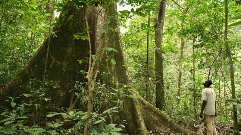 Le Congomobilise des fonds pour la préservation de ses forêts