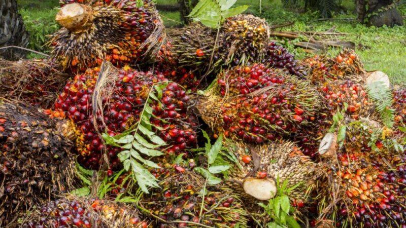L'OMC examine les mesures de l'UE visant l'huile de palme