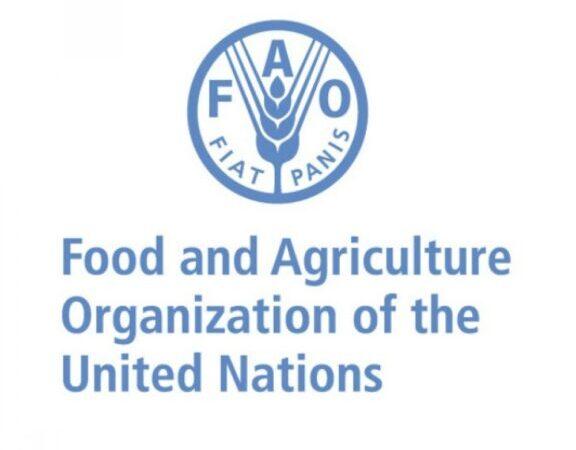 La FAO expérimente son programme «villes vertes» dans 6 villes africaines