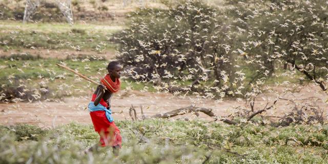 La menace d'une invasion de pèlerins plane sur l'Afrique de l'Est