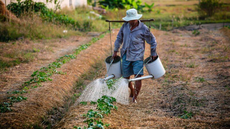 Mauritanie: Une stratégie agricole axée sur l'horticulture et le maraîchage