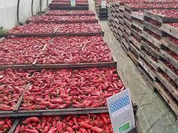 Le piment dépasse les principaux produits rwandais dédiés à l'exportation
