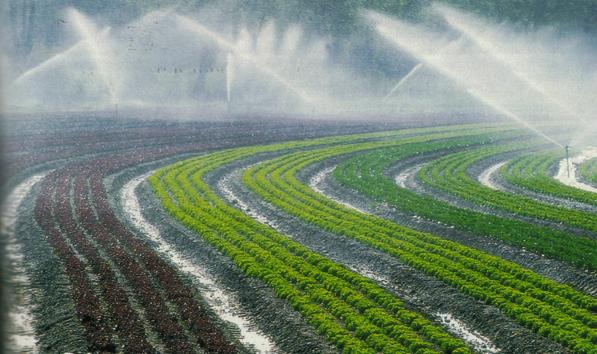 Algérie: succès la politique agricole
